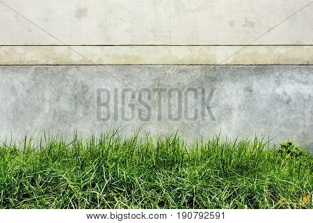 Background cement dark cracks gray color 2 tone and grass.