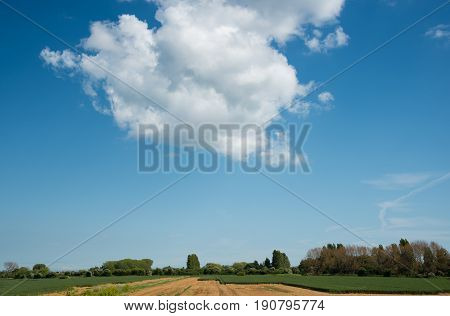 White cumulus dramatic clouds on a blue sky above a agricultural British grass land.