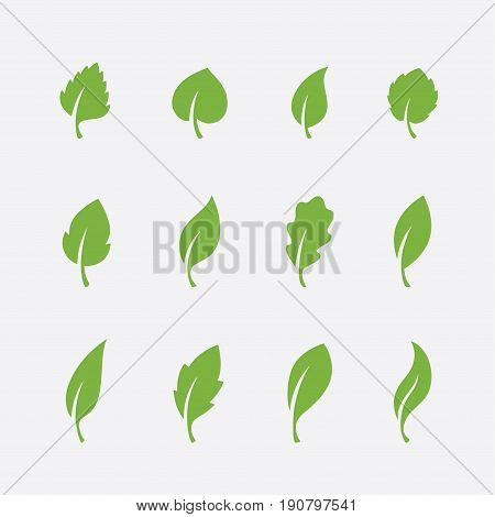 Leaf icons set isolated on white background. Green leaves of various shapes for natural eco or bio product logo or label design.