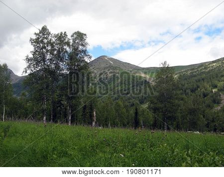 Alpine meadow in the foothills of the Kuznetsk Alatau