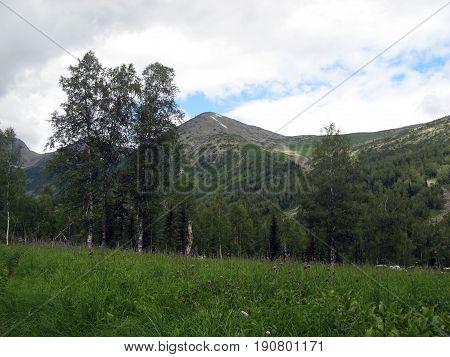 Alpine meadow in the foothills of the Kuznetsk Alatau