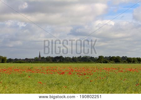 Poppies growing in summer field overlooking lechlade on the edge of the Cotswolds UK