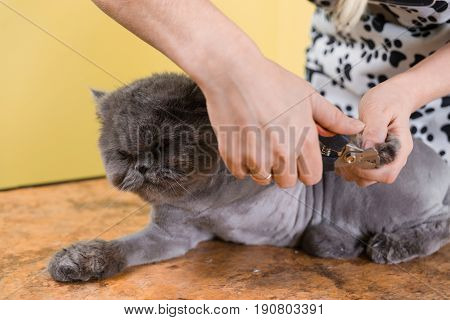 Trimming Claws In Pet Beauty Salon.