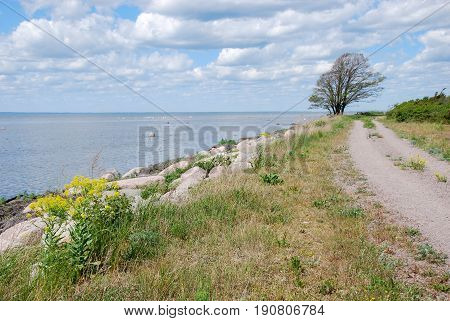 Country road along the coastline at the swedish island Oland in the Baltic Sea