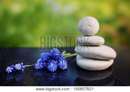 Zen composition, stones for massage and blue flowers Miskuri on a polished granite table in the summer garden.