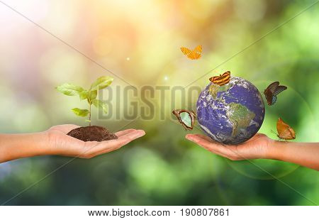 Plant And Earth In The Hand On Green Nature Background