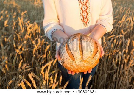 the young woman in a white national shirt holding the round baked bread with a crisp on wheat field background. harvest, agriculture, agronomics, food, production, organic bread concept.