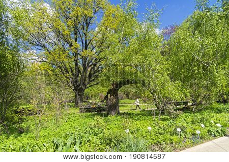 Spring in the Botanical Garden. Aptekarsky Ogorod (a branch of the Botanical Garden of Moscow State University) Moscow Russia