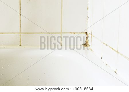Mould in a bathroom on the tiles and the silicon