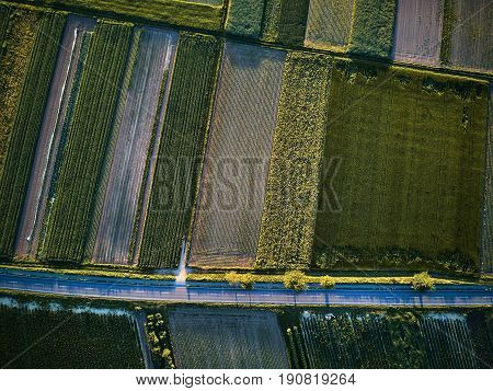 Aerial view of a country road with colorful agricultural fields in spring