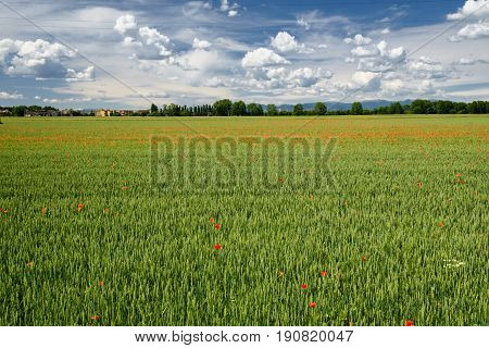 Springtime landscape in the park of Grugnotorto between Milan and Monza (Brianza Lombardy Italy) with poppies