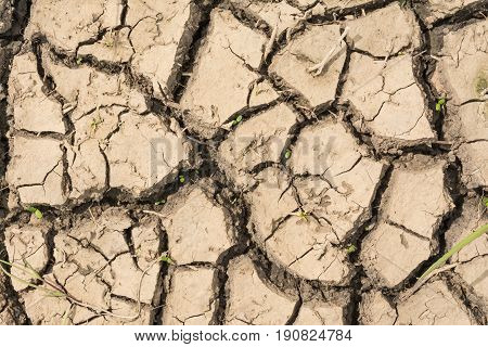 The Parched Earth Has Many Cracks From Intense Heat