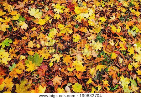 Full Frame Shot Of Falling Autumn Leaves with texture filter
