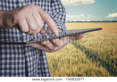 Agronomist holds tablet touch pad computer in the wheat field and examining crops before harvesting. Agribusiness concept.