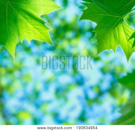 Beautiful natural border, fresh green leaves over soft focus foliage background, beauty and freshness of summer time nature