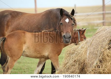 Nice Mare With Its Foal