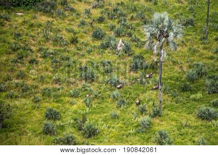 Aerial View Of A Herd Of Elephants.