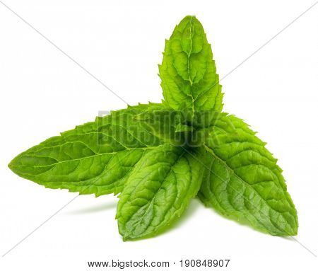 Fresh peppermint leaves isolated on the white background, clipping path included.