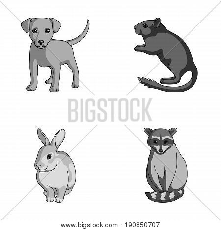 Puppy, rodent, rabbit and other animal species.Animals set collection icons in monochrome style vector symbol stock illustration .