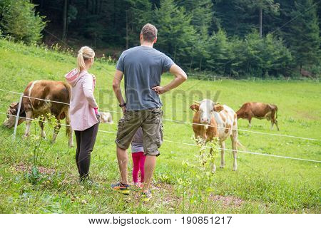 Family on a hike wearing sporty clothes observing and caressing pasturing cows on mountain meadow, Gorenjska region, Alps, Slovenia.