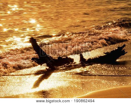 tree trunk in golden color sandy beach and sunlight reflection on water during dusk time