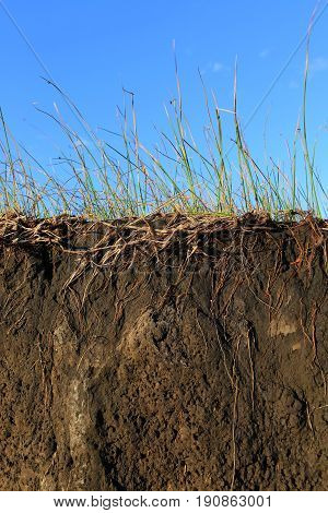 Erosion of the Soil, Grass Roots and Dirt