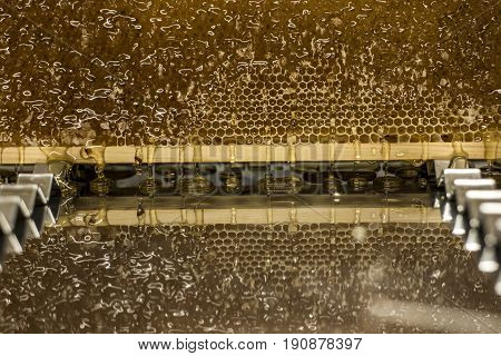 Glossy yellow golden honey comb reflection mirror sweet honey drips flow during harvest background or textspace
