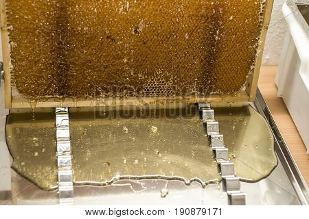 Glossy yellow golden honey comb sweet honey drips flow during harvest background or textspace