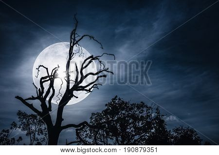 Night landscape of sky with bright super moon behind silhouette of dead tree serenity nature. Outdoors at nighttime.The moon taken with my own camera.