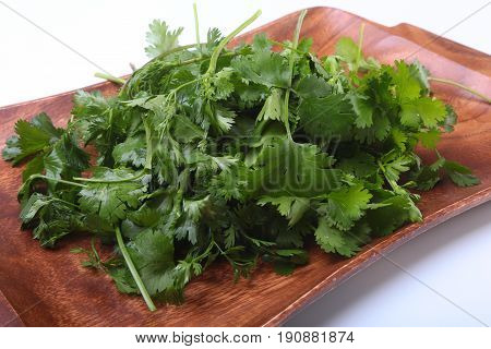 Fresh green cilantro, coriander leaves on wooden board