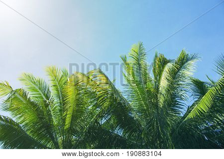 Palm tree crown with fluffy leaves on blue sky background. Palm on sky toned photo. Palm leaf frame. Tropical vacation banner template with text place. Tropical paradise background. Fluffy leaf border