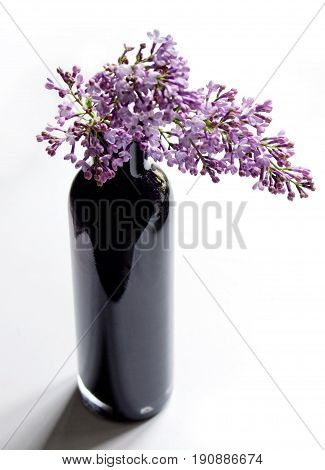 Common lilacs in a black glass vase