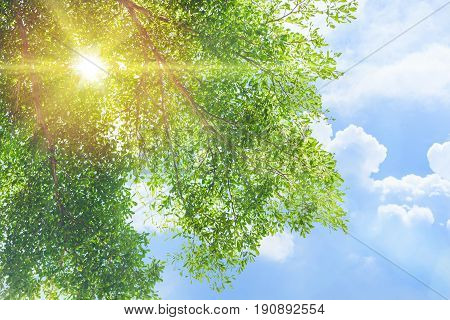 Nature Green Tree With Sun Light And Blue Cloud Sky In The Morning Summer For Natural Park Backgroun