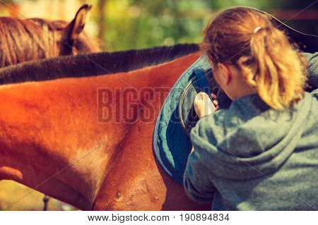 Taking care of animals horsemanship equine concept. Jockey young woman getting horse ready for ride on countryside.