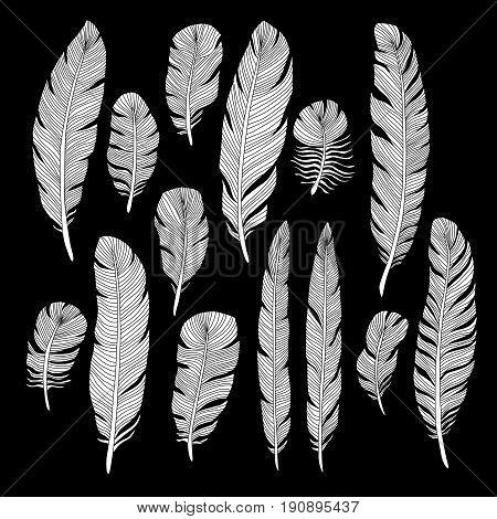 Sketch hand drawn birds feathers vector set. Sketch of feather bird illustration