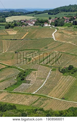 Vineyard Landscape In Chateau-chalon, In Jura, France
