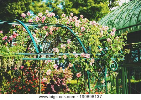 Beautiful flower arch with roses in summer garden
