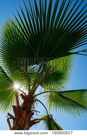 Summer Resort. Palm leaves against the blue sky. The sun and rays. Sunny day, wonderful weather