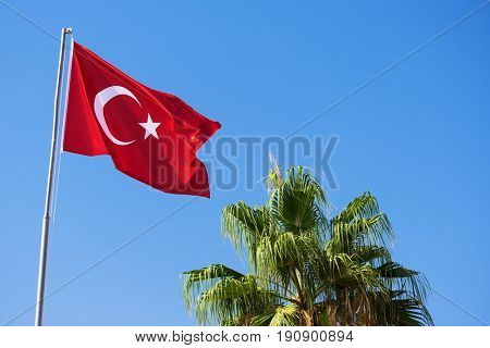 National flag of Turkey and the green palm tree against the clear blue sky