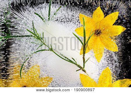 flower in ice cube