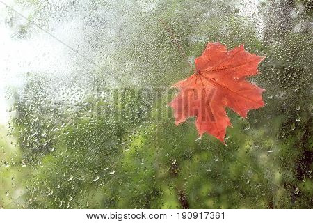 The first red Maple leaf was stuck on the window wet from raindrops / beginning autumn season