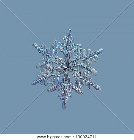 Snowflake isolated on uniform blue background. Macro photo of real snow crystal with hexagonal symmetry, glossy relief surface, six long, elegant arms and many side branches.