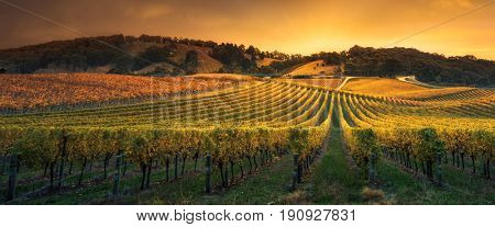 Stunning vineyard in South Australia