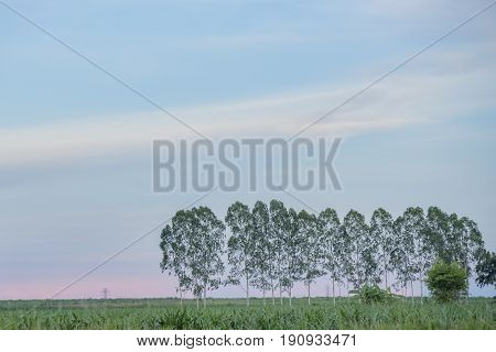 Solitary tree in the sunlight on blue sky background .