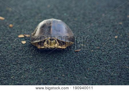 Turtle is shy inside shell on the floor take head for looking someone. Animal abstract background.
