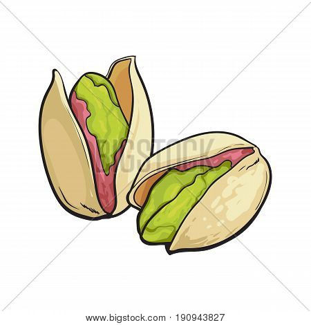 Two pistachio nuts, hand drawn sketch style vector illustration isolated on white background. Realistic hand drawing of pistachio nuts, vegetarian snack