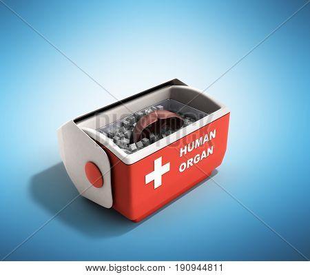 Organ Transportation Concept Open Human Organ Refrigerator Box Red 3D Render On Blue Background