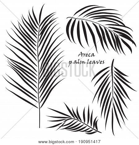 Branch tropical palm areca leaves. in black colors, isolated on white background. Vector illustration