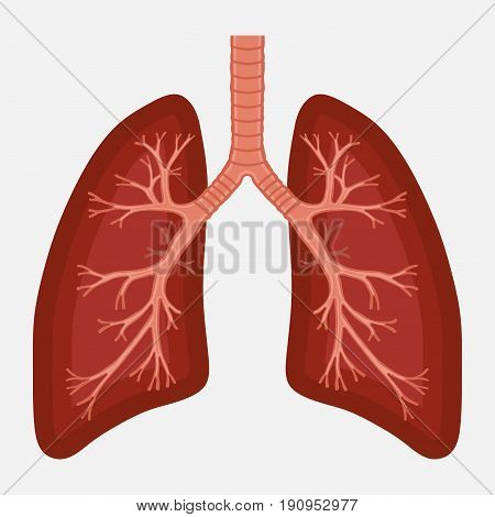 human lung anatomy diagram. illness respiratory cancer graphics.respiratory systems. Vector