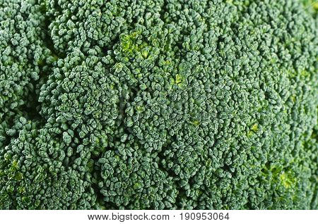 Fresh Broccoli Close Up A Background